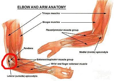 Elbow, Forearm Pain | AHCN
