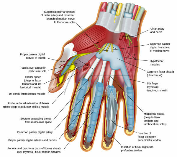How to Treat Wrist Tendonitis How to Treat Wrist Tendonitis new picture