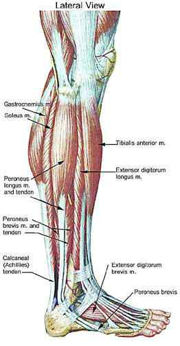 Anterior Ankle Pain When Walking