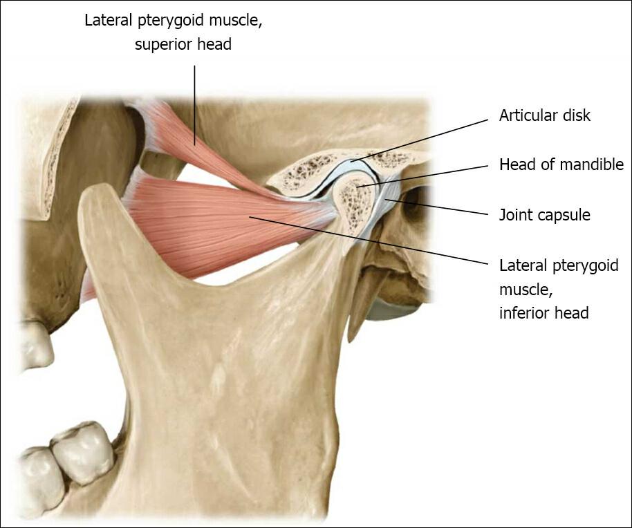 Tempero-Mandibular Pain – TMJ | AHCN